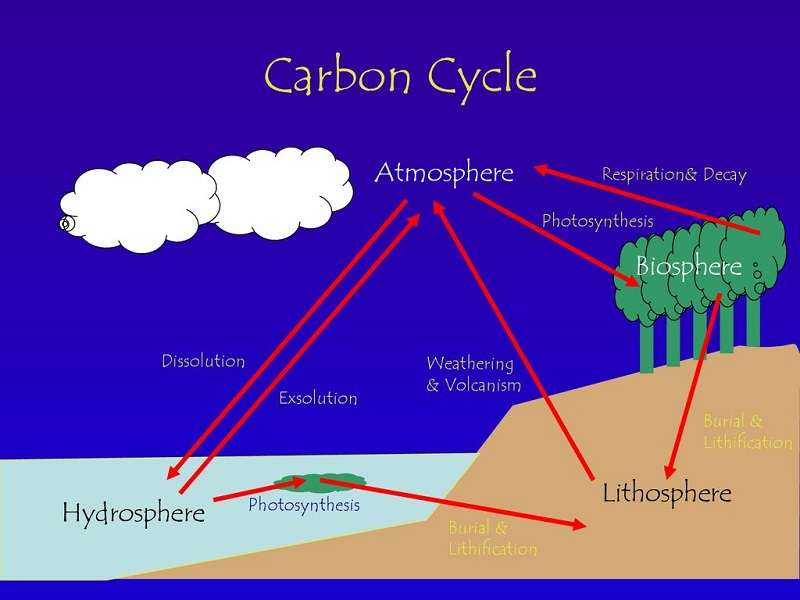 Carbon In The Lithosphere And Hydrosphere